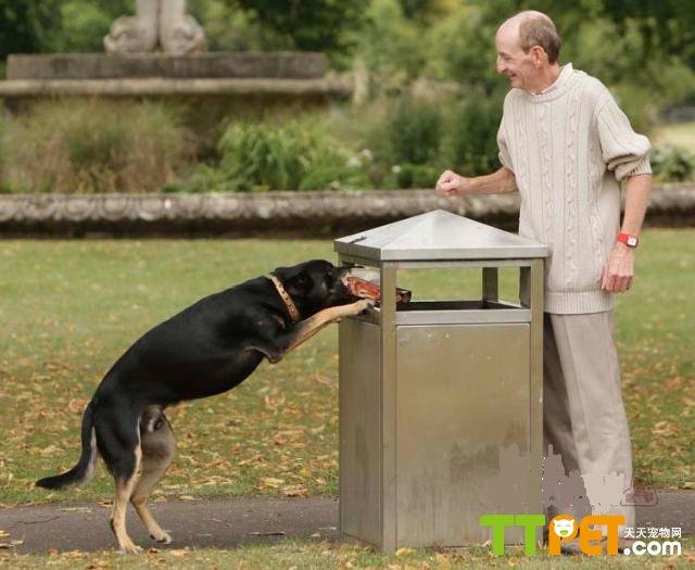 如果主人经常外出,只留下狗在家的话,就要注意了,因为狗类的依赖性是很强的,长时间的独处会使它的性情发生变化,变得易怒、烦躁,会撕咬身边的一些物品。总之,凡在它视线之内能咬到的东西,都会成为它的玩具。当发现这种情况时。主人平时应多抽点儿时间陪它玩,用手抚摩它的头部及背上的毛发,多和它说话。当狗重新感受到主人对它的爱时,性情就会慢慢地恢复正常。 如果狗不是因为以上的原因,而纯粹是为了好玩去翻咬垃圾,可能就要用以下方法了。 (1)盯着它,一旦发现它靠近拉圾桶就大声地呵斥它,让它主动离开。 (2)如它不离开,就