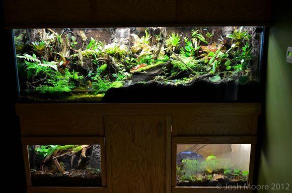 一块树形沉木极品雨林水陆生态缸