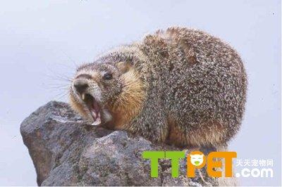 冬眠的动物,例如蛇,青蛙等等,其实土拔鼠也是需要冬眠的,每当冬天来临